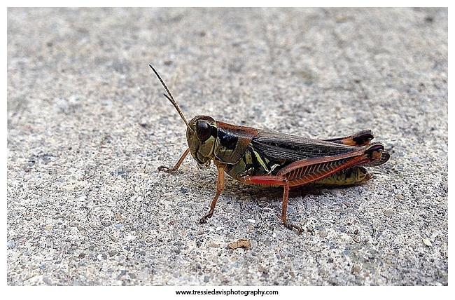 iPhone photo of a Grasshopper
